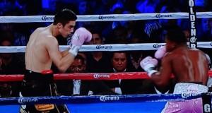 wbc_boxing